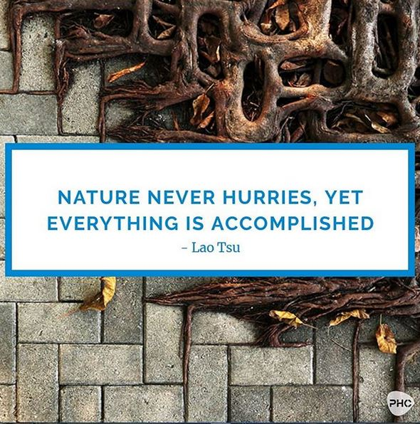 Nature Never Hurries, Yet Everything is Accomplished